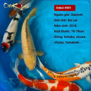 Lô cá 70- 80 cm từ Danichi