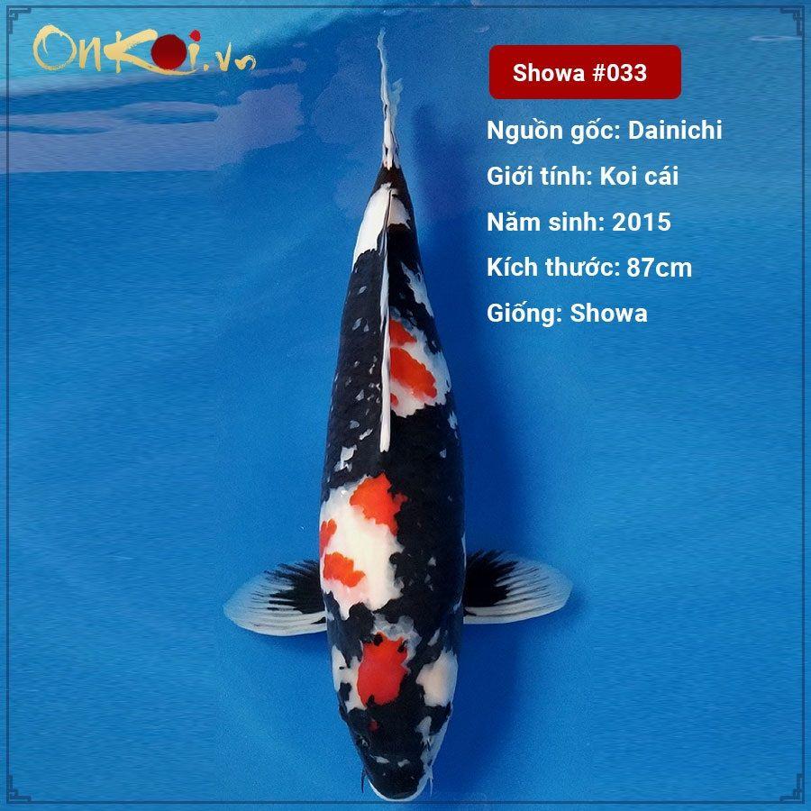 Koi Doitsu Showa 87 cm 5 năm tuổi #033