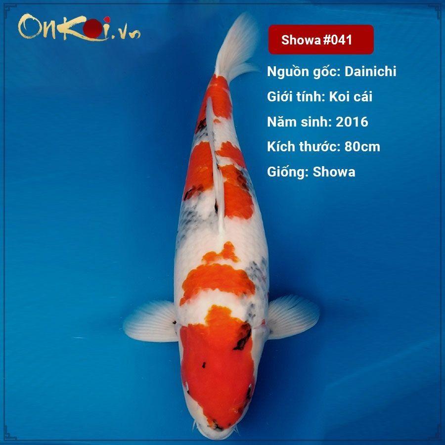Koi Showa 80 cm 4 năm tuổi #041