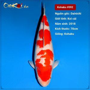 Onkoi Kohaku 70 cm 2 năm tuổi #092