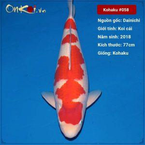 Onkoi Kohaku 77 cm 3 tuổi #058
