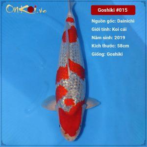 Onkoi Ginrin Goshiki 58cm 2 tuổi #015