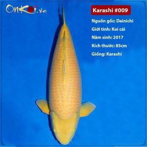 Onkoi Karashi 4 năm tuổi 85cm #009
