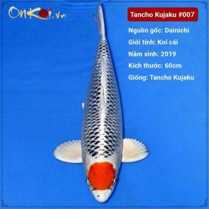 Onkoi Tancho Kujaku 60 cm 2 năm tuổi #007