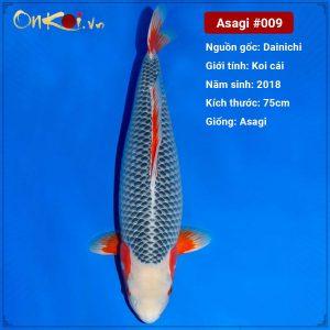 Onkoi Asagi 3 tuổi 75 cm #009