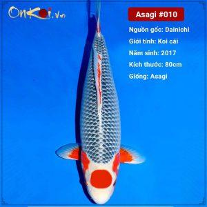 Onkoi Asagi 80cm 4 tuổi #010