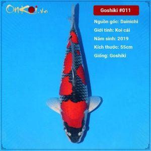 Onkoi Goshiki 55 cm 2 năm tuổi #011