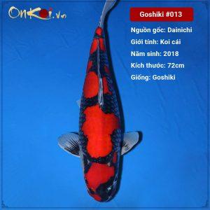 Onkoi Goshiki 72cm 3 năm tuổi #013