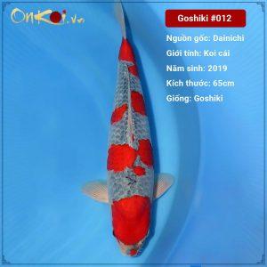Onkoi Goshiki 65cm 2 năm tuổi #012