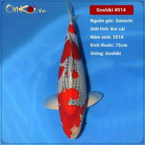 Onkoi Goshiki 75cm 3 tuổi #014