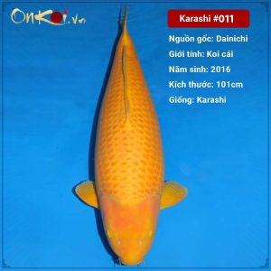 Onkoi Karashi 5 năm tuổi 101 cm #011