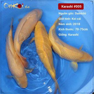 Lô Onkoi Karashi 70-75 cm 3 năm tuổi #005