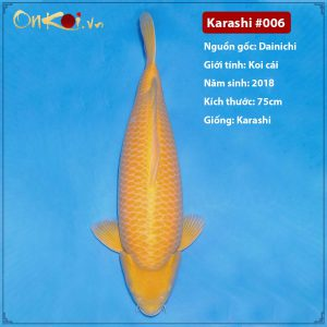 Onkoi Karashi 75 cm 3 năm tuổi #006