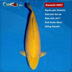Onkoi Karashi 80 cm 4 năm tuổi #007