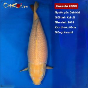 Onkoi Karashi 3 năm tuổi 83cm #008