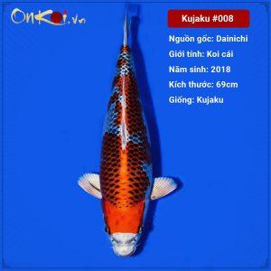 Onkoi Kujaku 69 cm 3 năm tuổi #008