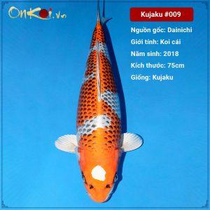 Onkoi Kujaku 75 cm 3 năm tuổi #009