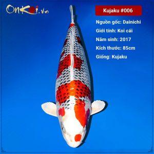 Onkoi Kujaku 85 cm 4 năm tuổi #006