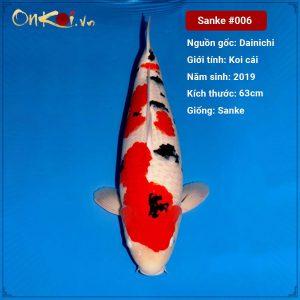 Onkoi Sanke 63 cm 2 năm tuổi #006