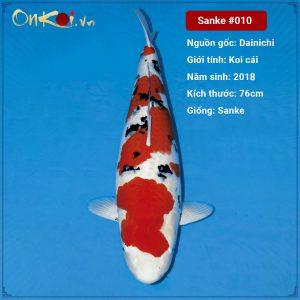 Onkoi Sanke 76 cm 2 năm tuổi #010