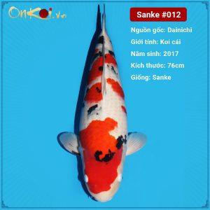 Onkoi Sanke 78 cm 4 năm tuổi #012