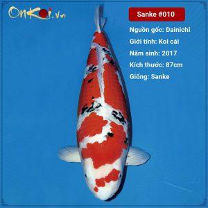 Onkoi Sanke 87 cm 4 năm tuổi #011