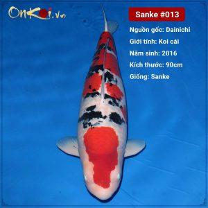 Onkoi Sanke 90 cm 5 năm tuổi #013