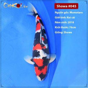 Onkoi Showa 3 tuổi 76 cm #045