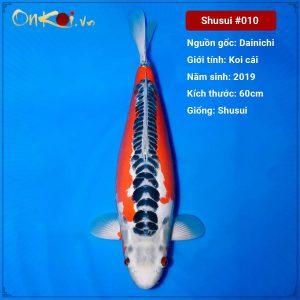 Onkoi Shusui 60 cm 2 năm tuổi #010