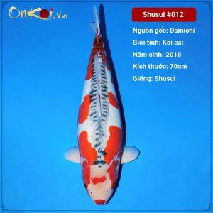 Onkoi Shusui 70 cm 3 tuổi #012