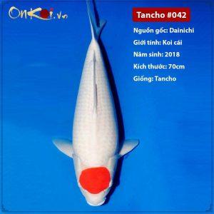 Onkoi Tancho 70cm 3 tuổi #042
