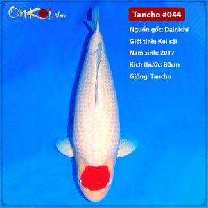 Onkoi Tancho 80 cm 4 tuổi #044