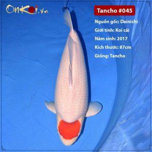 Onkoi Tancho 87 cm 4 tuổi #045